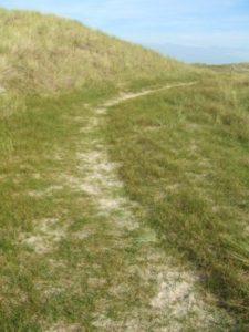 Dünenweg - Birgit Jütten